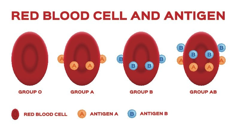 ABO Blood Types and Antigens