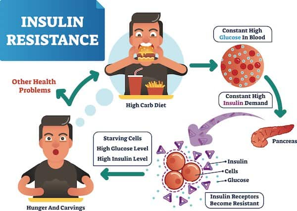 Too Many Carbs for Too Long Cause Insulin Resistance