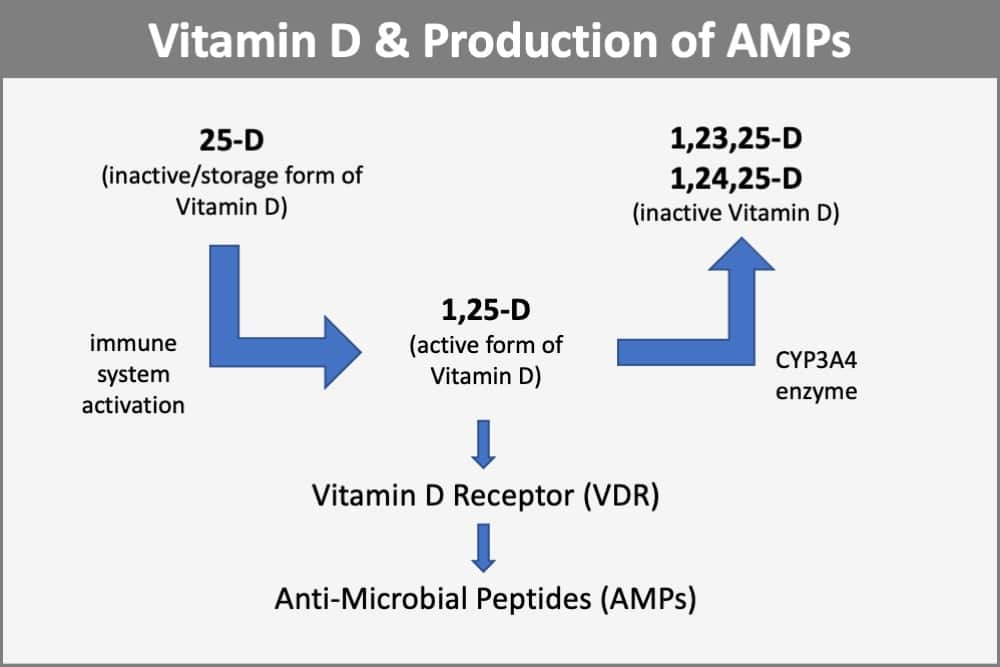 Vitamin D Assists in the Production of AMPs that Fight the Flu Virus